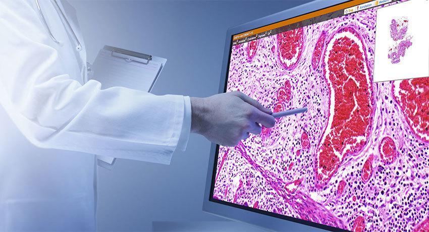 Гистологические исследования