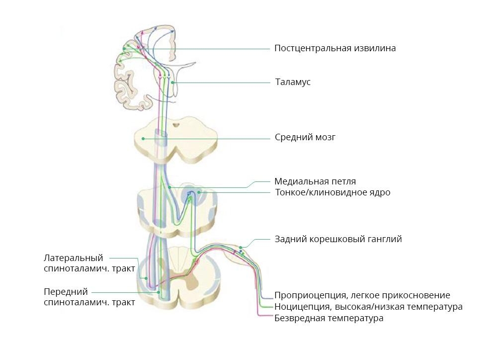 обезболивание хабр2