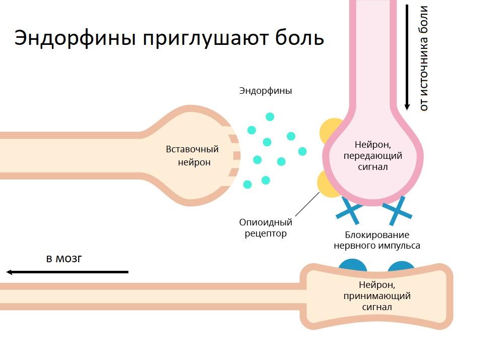 обезболивание хабр7